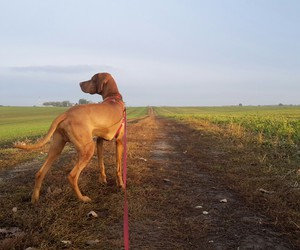 dog, fields, and walk image
