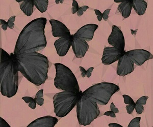 background, butterfly, and wallpaper image