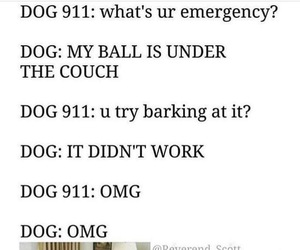 dog, funny, and 911 image