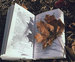 leaves, autumn, and book image