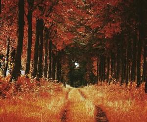 leaves, autumn, and orange image
