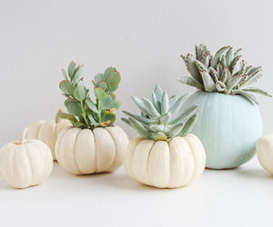 decoration, Halloween, and cactus image