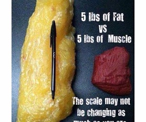 fat, fitness, and gym image