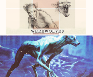harry potter and werewolf image