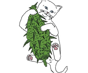 cat and weed image