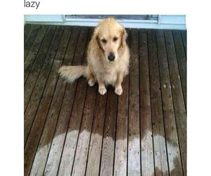 dog, funny, and Lazy image