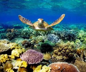 turtle, ocean, and great barrier reef image