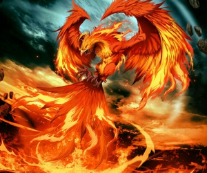 phoenix, fire, and bird image