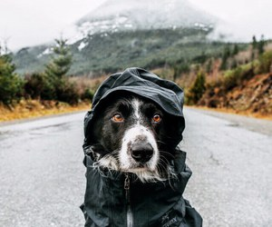 backpack, dog, and mountain image