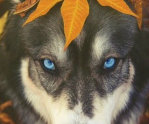 dog, animal, and autumn image