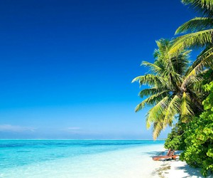 palm trees, strand, and summer image