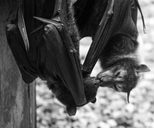 animal and bat image