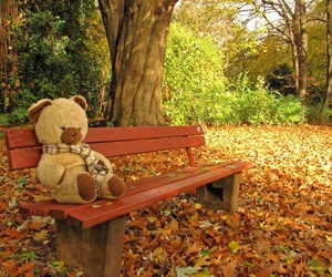 autumn, teddy, and leaves image