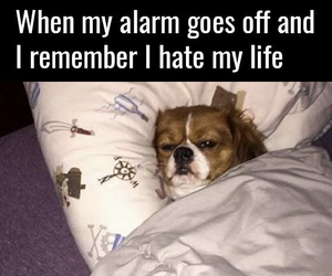 alarm, animals, and bed image