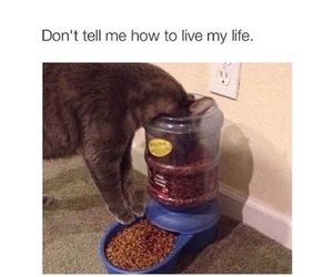 funny, cat, and life image