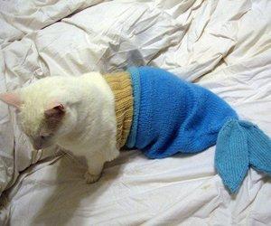 cat, cute, and mermaid image