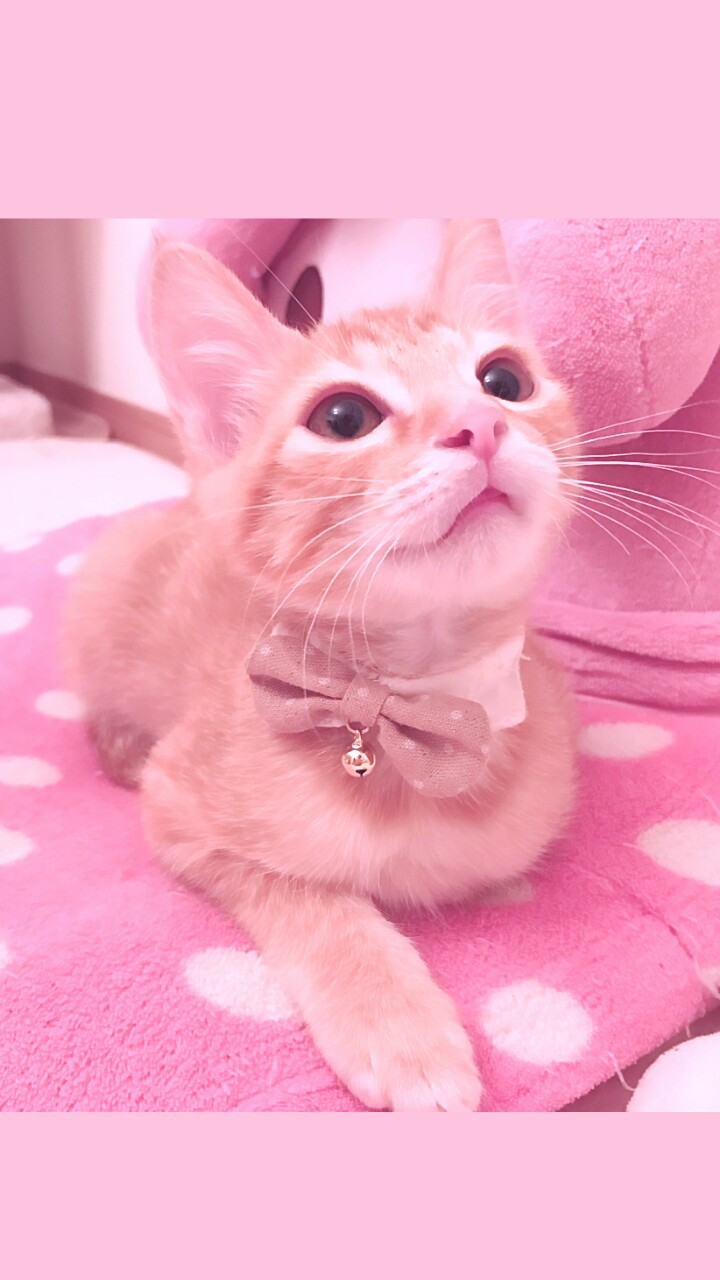Kitty Animals Baby Baby Cat Background Beautiful Beauty Cat Cute Animals Cute Baby Cute Kitty Dots Iphone Kawaii Kitten Kitty Nature Photography Picture Pink Still Life Wallpapers We Heart It Pink Background