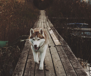 animal, chien, and dog image