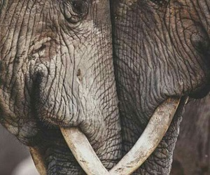elephants old love wild image