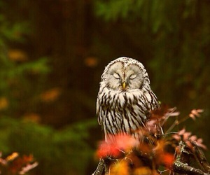 owl, autumn, and nature image