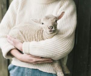 animal, white, and sheep image