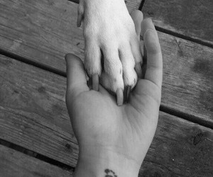 dogs, biglove, and forever image