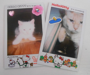 cat, fuji instax, and hello kitty image