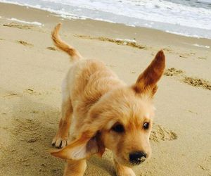 animals, puppy, and beach image