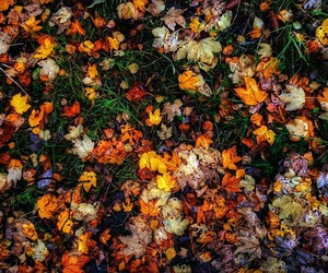 autumn, beauty, and colour image