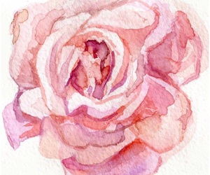 flower, rose, and pink image
