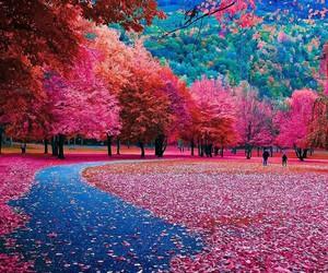 autumn, like, and nature image