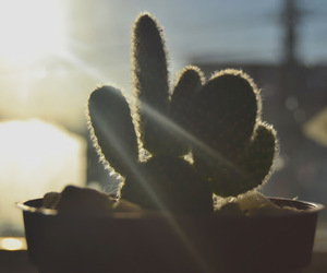 background, cacti, and cactus image