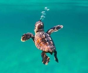 little, ocean, and wildlife image