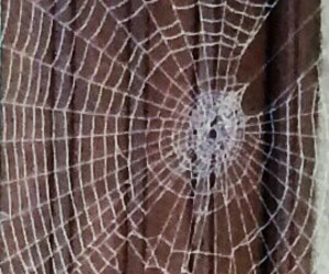haloween, spider, and nature image