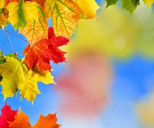 autumn, colors, and background image