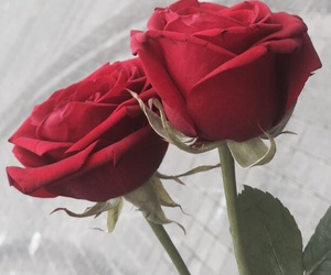 rose, sign, and love image