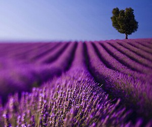 awesome, lavender, and color image