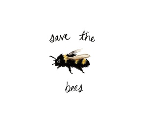 bee, quotes, and animal image
