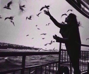birds, black and white, and girl image