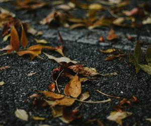 autumn, photography, and autumn leaves image