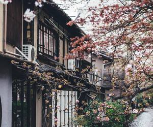 japan, asia, and kyoto image
