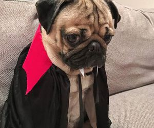 Dracula, Halloween, and pug image