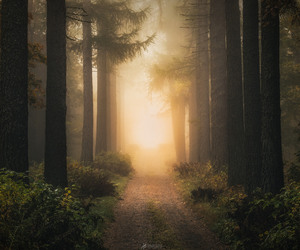 beautiful nature forest image
