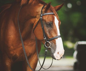 equestrian, horse, and equestrian sport image