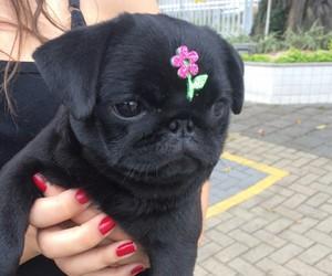 dog, flower, and pug image