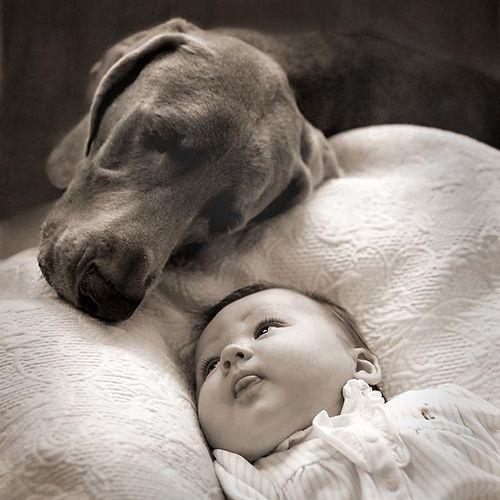 dog, baby, and sweet image