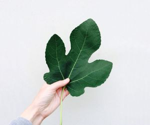 green, leaf, and plant image