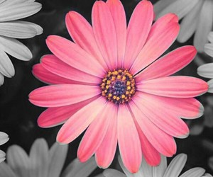 flowers, pink, and orange image
