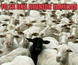 divertido, familia, and funny image