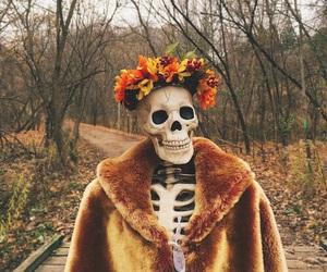autumn, skeleton, and fall image